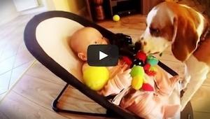 Koira varasti lapsen lempilelun. Se tunsi syyllisyyttä ja pyysi lapselta anteeks