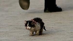 Kaikki tiesivät, että tähän kissaan ei kannattaisi koskea, mutta kun mies otti s