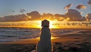 Koirat eivät koskaan kuole. Ne vain nukkuvat sydämessäsi. Jokaisen eläinten ystä