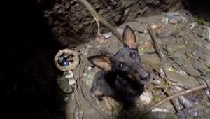 Kun pelastusmiehet menivät kaivon pohjalle pelastamaan koiraa, sen reaktio ja te
