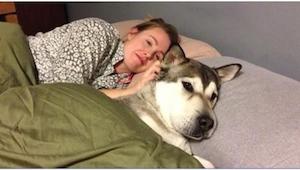 Etkö päästä koiraa sänkyysi? Ehkä tämän artikkelin jälkeen haluat ne aina lähell