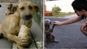 Lapsi ruokki koditonta koiraa. Nähdessään tämän ohikulkija pysähtyi ja sanoi hän
