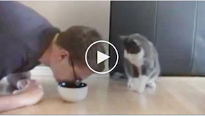 Hän teeskentelee syövänsä kissan ruuan kulhosta. Lemmikin reaktio? Korvaamaton!