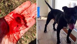Nainen löysi jotain pelottavaa koiransa suusta ja päätti varoittaa muita!