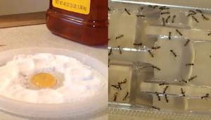 Ei enää torakoita, kirppuja tai muurahaisia asunnossa - tällä yksinkertaisella a