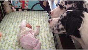 Mitä tapahtuu, kun vauvan jättää yksin koiran kanssa? Katso itse!