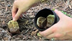 Kannattaa aina pitää käytetty teepussi käsien ulottuvilla. Katso miksi!