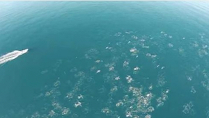 Mies kuvasi valtamertä drone-lennokilla. Se mitä hän onnistui kuvaamaan on uskom