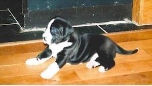 Pariskunta osti koiranpennun. Jo viittä kuukautta myöhemmin heidän oli vaikea us