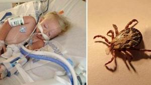 Tämä kaksivuotias kuoli leikittyään pihalla – hänen perheensä varoittaa tappavas