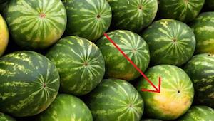 Viisi vinkkiä, miten valita täydellinen kypsä ja makea vesimeloni!