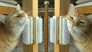 Onko kissasi tylsistynyt? Siinä tapauksessa nämä 9 konstia ovat juuri sinua vart