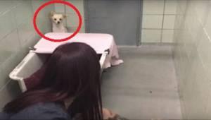 Pelästynyt koira piiloutuu nurkkaan, mutta nähtyään mitä vapaaehtoistyöntekijä p