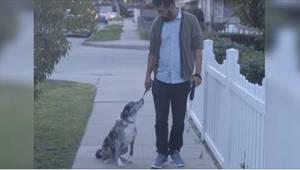Mies otti vanhan hylätyn koiran. Eräänä päivänä kävelyllä koira lakkaa reagoimas