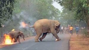 Se mitä elefanteille tapahtuu Intiassa, on todella ikävää. Eikö kukaan todellaka
