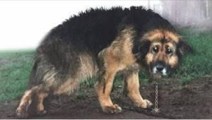 Sairasta koiraa pidettiin 10 vuotta kiinni kettingissä. Katso erityinen hetki, j