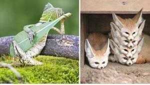 23 kuvaa eläimistä täydellisellä hetkellä. Numero 10 on ihanteellinen puhelimen