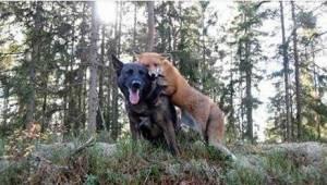 Hänen koiransa katosi päivittäin metsään. Kun omistajalle vihdoin selvisi, minkä