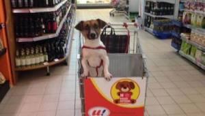 Supermarketin päällikkö sai tarpeekseen autoihin suljetuista koirista, joten hän
