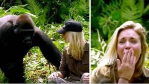 Hän pelasti kaksi gorillaa, ja kuuden vuoden kuluttua hän vieraili heidän luonaa