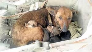 Kulkukoira hoiti hylättyä vauvaa - koirilla on suurempi sydän kuin joillain ihmi