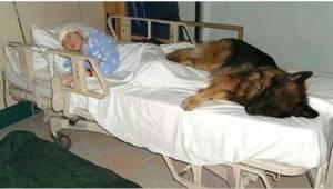 Ennen kuolemaansa hän kirjoitti liikuttavan kirjeen koiransa puolesta. Koiran uu