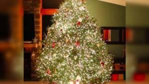 Näin upeaa joulukuusta emme ole ennemmin nähneet!