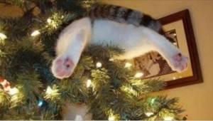 Nämä kissat eivät tiedä että joulukuusta ei saa koskea. Katso hauska video.