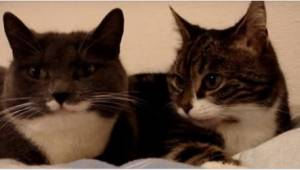Omistaja kuvasi kahta sängyssä makaavaa kiivaasti juttelevaa kissaa. Katso, mite