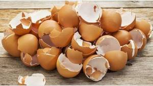 9 syytä, miksi kananmunan kuoret kannattaa ripotella puutarhaan pois heittämisen