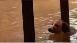 Omistajat jättivät koiran taakseen ja karkasivat. Onneksi nuo ihmiset saapuivat