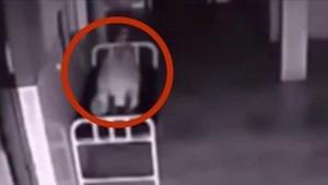 Tämä kuollut nainen makaa sairaalan käytävällä. Valvontakameran ikuistama 0:10 k