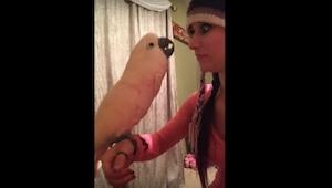 Video tästä omistajalleen valittavasta papukaijasta on hauskin pätkä minkä tulet