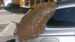 Mehiläisparvi seurasi naisen autoa kaksi päivää. Syyn havaitsivat vasta yllättyn