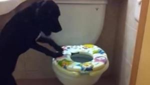 Omistaja kuvaa koiraansa salaa sen mennessä kylpyhuoneeseen. 16 sekunnin kohdall