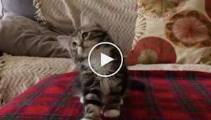 Kun lemmikin omistaja soittaa juuri tämän kappaleen, hänen kissansa tekee jotain