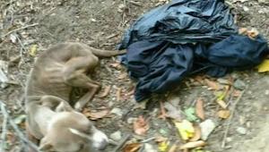 Nainen löysi koiran roskiksesta. Henkilö, joka paljastui koiran omistajaksi oli