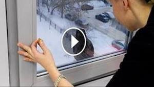 Se mitä tämä lintu teki naisen avattua sille ikkunan, on koomista!