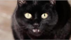 Katso, mitä tapahtuu, kun nukut kissan kanssa. Tältä on aina tuntunut, mutta lop
