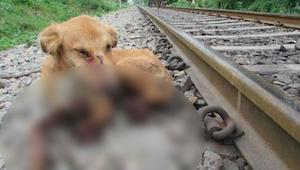 Junaradan työntekijät löysivät koiran jonka jalat olivat murtuneet - sitten piti