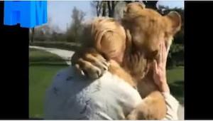 Nainen hoiti leijonia, mutta hänen täytyi antaa ne eläintarhalle. Se kuinka ne t