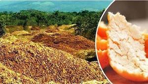 He heittävät tuhansia tonneja appelsiininkuoria metsään. 16 vuotta myöhemmin maa