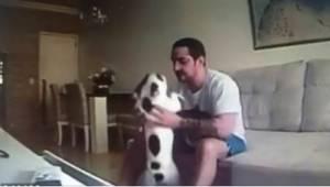 Siitä lähtien kun kihlattu asui hänen kanssaan, hänen koiransa alkoivat käyttäyt