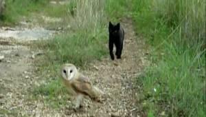 Kissa lähestyy pöllöä. Se mitä se tekee seuraavaksi, yllätti miljoonat ihmiset!