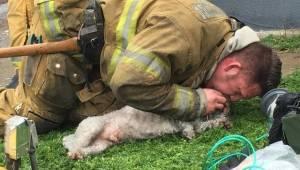 Palomies haki kuolleen koiran palavasta talosta. Hetkeä myöhemmin he kaikki itki