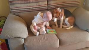 Vanhemmat videoivat, miten heidän tyttärensä leikkii koiran kanssa. Jo 13 miljoo