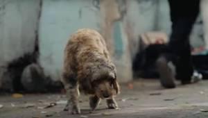Hän tiesi, että hänen oli palautettava kadonnut koira soittamalla annettuun nume