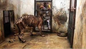 Kuoleman eläintarha - eläimiä kohtaa täällä varma nälkään nääntyminen!