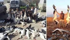 Syyriassa ja Libanonissa haikaroita salametsästetään runsain määrin. Niiden määr