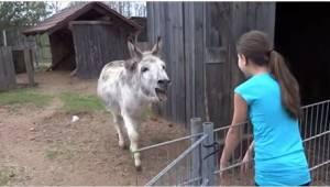 Upea video joka näyttää, miten aasi ilahtuu pienen ystävänsä näkemisestä.